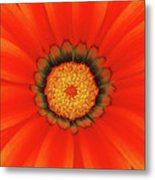 The Beauty Of Orange Metal Print