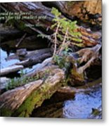 There Would Be No Forest... Metal Print