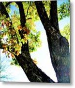Tree With Light Metal Print