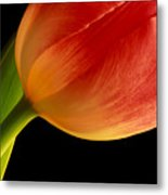 Tulip Close-up Metal Print