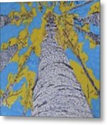 Up At Birch Metal Print