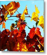 Vineyard 12 Metal Print