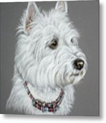 West Highland White Terrier  Metal Print by Patricia Ivy
