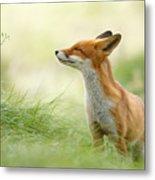 Zen Fox Series - Zen Fox Metal Print
