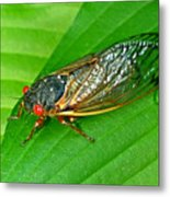 17 Year Periodical Cicada Metal Print