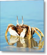 Crab On The Tropical Beach Metal Print