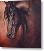 Friesian Head Study Metal Print