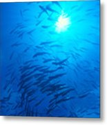 Micronesia Marine Life Metal Print
