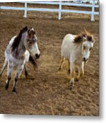 Miniature Horse Metal Print