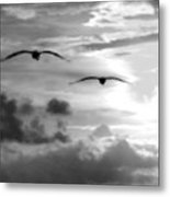 2 Pelicans Flying Into The Clouds Metal Print