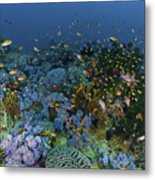 Reef Scene With Coral And Fish Metal Print by Mathieu Meur