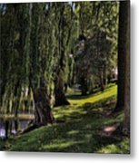 Willows And Oaks Metal Print