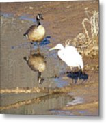 2012-white Crane And Canadian Goose Metal Print