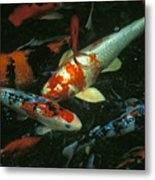 The Koi Pond Metal Print