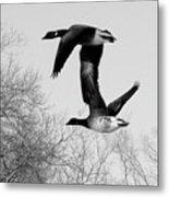 Flying Together Metal Print