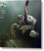 Green Sea Turtle Chelonia Mydas Metal Print