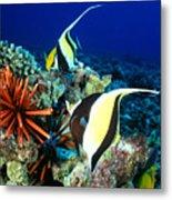 Hawaiian Reef Scene Metal Print