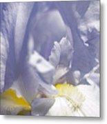 Iris Flowers Metal Print