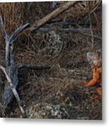 Orange Iguana Metal Print
