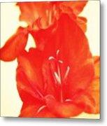 Gladiola Metal Print by Cathie Tyler