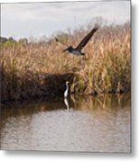 Turkey Creek In Palm Bay Florida Metal Print