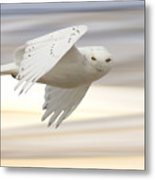 Snowy Owl In Flight Metal Print