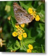 5 Yellow Flowers And A Buttefly Metal Print