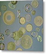 Close View Of Diatoms Metal Print