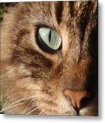 Cat Portrait Metal Print