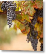 Grapes On The Vine Metal Print by Andy Dean