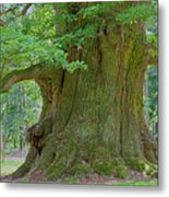 800 Years Old Oak Tree  Metal Print by Heiko Koehrer-Wagner