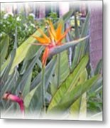 A Bird In Paradise Metal Print
