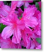 A Burst Of Pink Metal Print