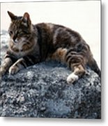 A Cat From Rome Metal Print