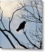 A Crow In My Eyes View Metal Print