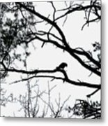A Crow Shook Down On Me The Dust Of Snow Metal Print by Fareeha Khawaja