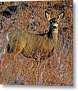 A Doe   A Deer Metal Print