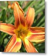 A Flower At The Farm Metal Print