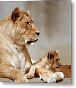 A Lioness And Cub Metal Print