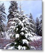 A Peaceful Winter Day Metal Print