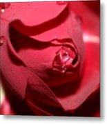 A Rose By Any Other Name Would Smell As Sweet..... Metal Print