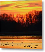 A Scene At Bombay Hook National Metal Print