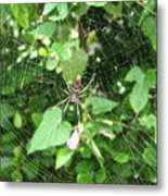 A Spider Web Metal Print