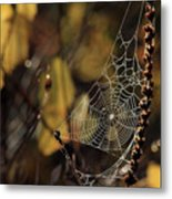 A Spiders Creation Metal Print