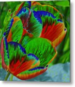 A Stained Tullip   Metal Print
