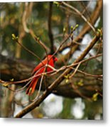 A Touch Of Red Metal Print