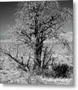 A Tree In The Dry Land Metal Print