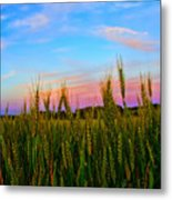A View From Crop Level Metal Print
