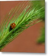 A Walk In The Tall Grass Metal Print