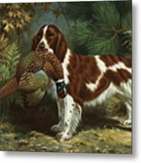 A Welsh Springer Spaniel Holds A Dead Metal Print by Walter A. Weber